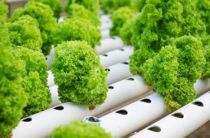 hướng dẫn trồng rau sạch ngay tại nhà bằng phương pháp thủy canh tĩnh